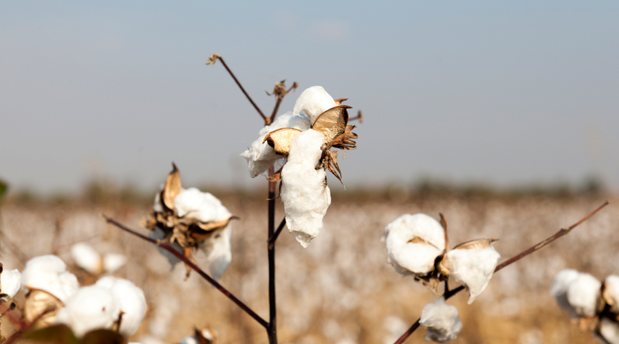 Textile Exchange Anoints Sustainability Leaders