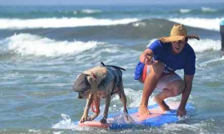 Surf Dogs Make Waves At Del Mar Fundraiser