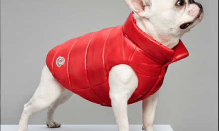 Good Dog: Moncler x Polo Dog Couteur
