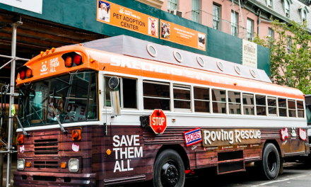 BOBS from Skechers Roving Rescue Bus Arrives In New York City