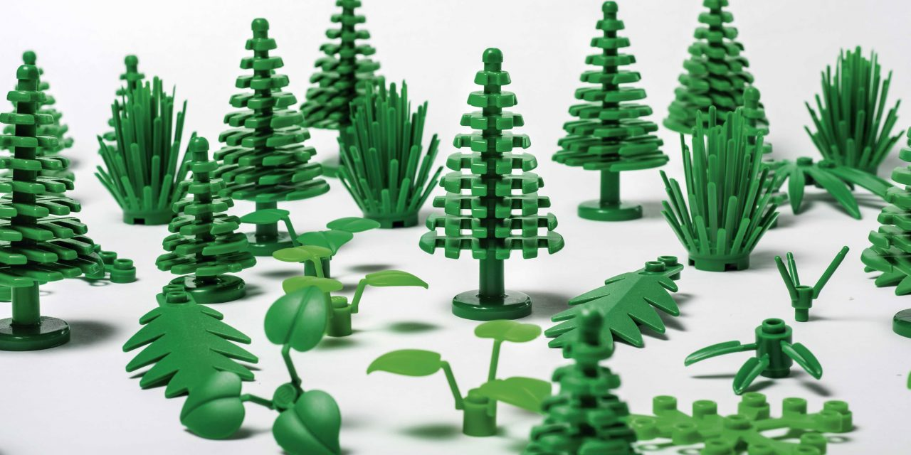 Sugar Cane Forest
