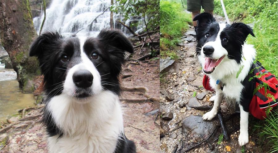 Meet Meadow! Merrell's First Dog Ambassador