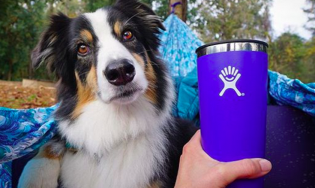 Hydro Flask Has 'Incredible Amount Of White Space'