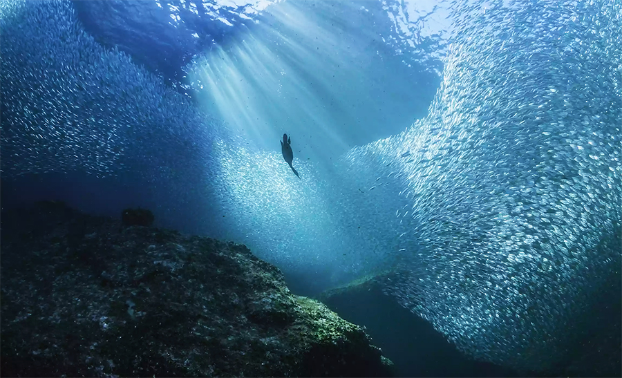 Five Organizations Fighting To Save Our Oceans