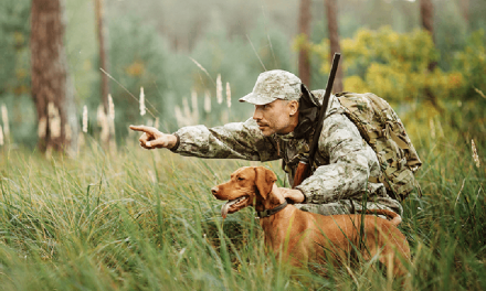 Sportsman's Warehouse Adeptly Seizing Firearms Opportunities