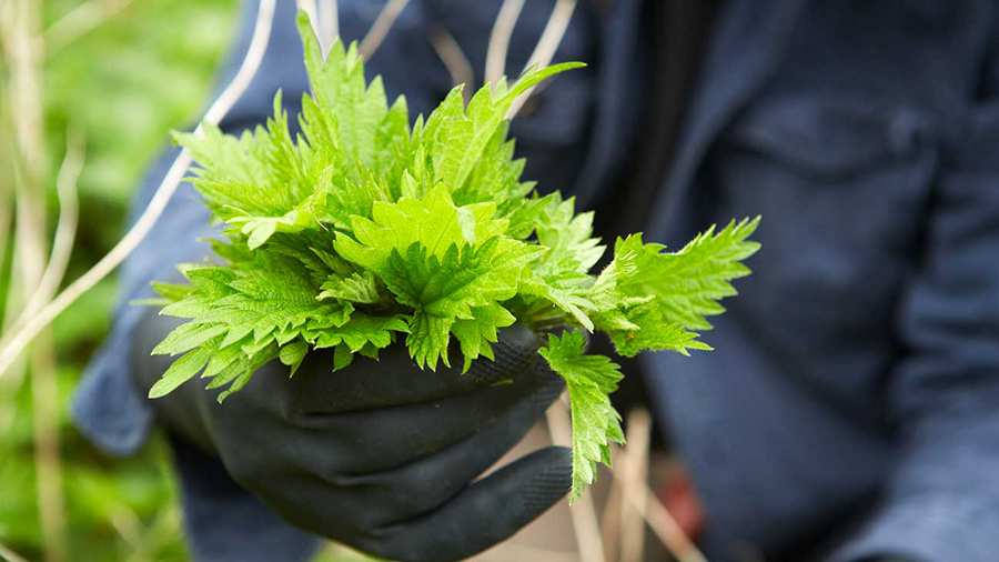 The Nettle Project