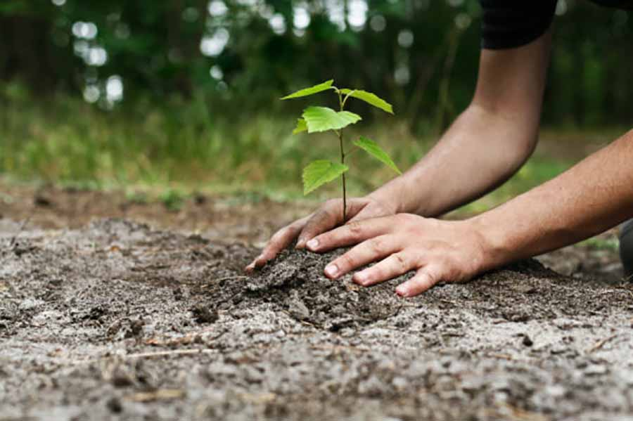 Timberland Offering To Plant Trees In Exchange For Slower Delivery