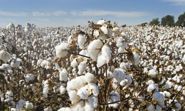 Cotton Council International Joins Sustainable Apparel Coalition