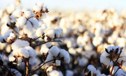 Delta Apparel Joins Cotton Leads Program