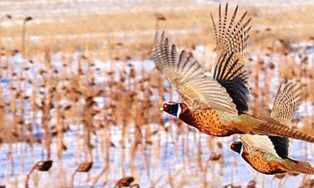 Pheasants Forever Expands ND Working Lands Conservation Initiative With New Hire