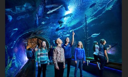 Johnny Morris' 'Wonders of Wildlife' Once Again Named #1 Aquarium