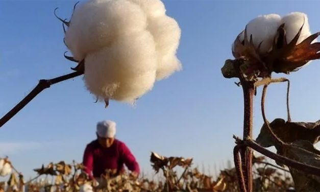 U.S. Bans Cotton From Xinjiang Region