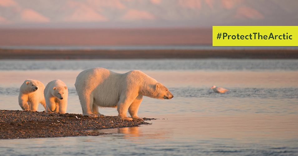 The Conservation Alliance + 77 Members Urge President-Elect Biden To Protect The Arctic Wildlife Refuge From Oil Development