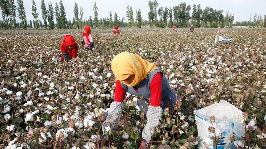 Senate Passes Bill Banning Imports From Xinjiang, China