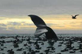 Obama Declares Bristol Bay Off Limits to Oil and Gas Exploration